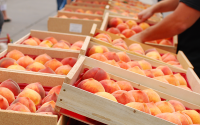 Bella Viva Farmers Market