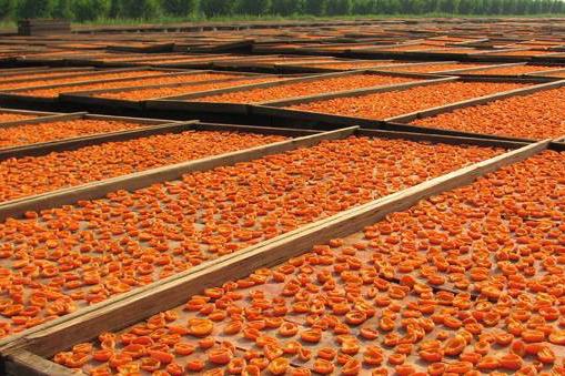 Bella Viva - Sun Dried Apricots